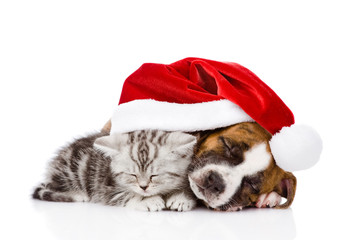 sleeping Scottish kitten and puppy with santa hat. isolated