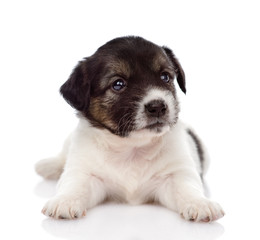 mixed breed puppy looking at camera. isolated on white