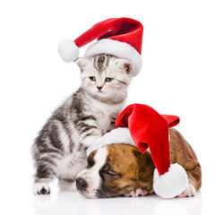 Scottish kitten and sleeping puppy with santa hat. isolated