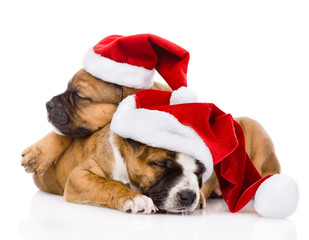 two cute puppy with santa hat. isolated on white