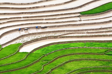 Terraced rice fields - Two farmers at work, the old fashion way,