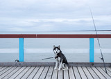 Husky and a fishing rod on a jetty