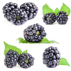 Collections of Blackberry with leaves isolated on white