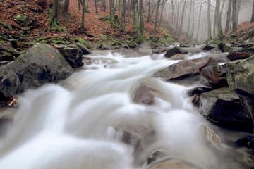 ruscello nella riserva naturale acquerino
