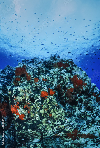 Italy, Ponza Island, Tyrrhenian sea, red sponges