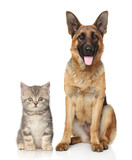 Fototapety Dog and cat together