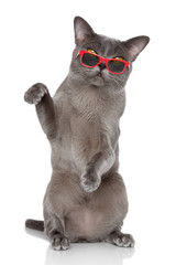 British cat sits in sunglasses