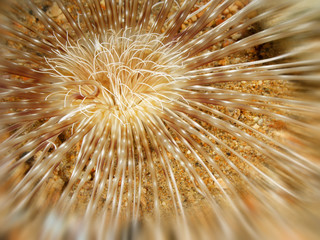 Close-up shot of a sea flower