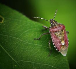 small beetle macro