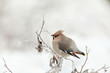 small bird in the cold winter