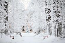 Neve paesaggio freddo inverno foresta
