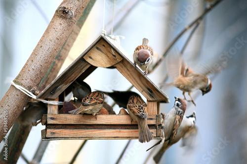 Fotobehang Vogel Bird Feeders