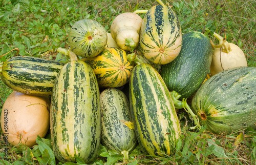 Vegetable marrows 26