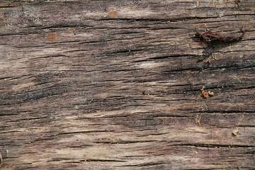 Fond texture, bois naturel
