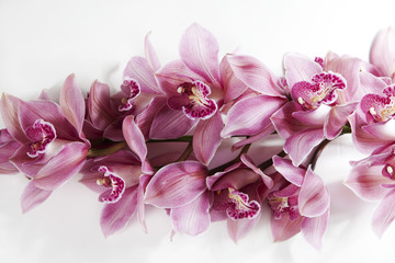 pink orchid branch