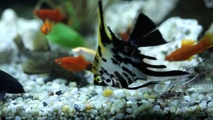 Aquarium with colorfull fish