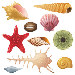 seashell icons