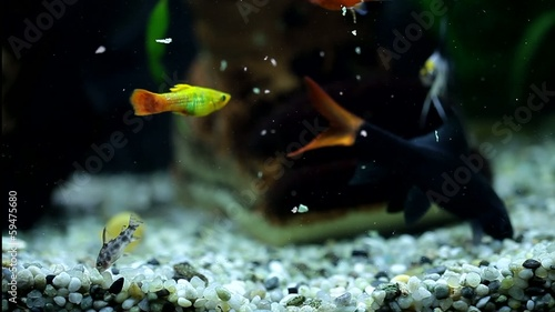 Aquarium with colorfull fish