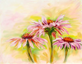 Fototapety Echinacea, oil painting