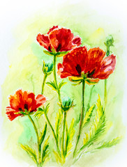 Poppies on green, watercolor
