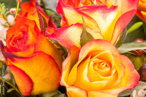 bunte frische blumen rosen in rot und orange dekoration