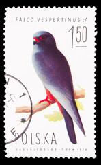 POLAND - CIRCA 1974: A stamp printed in POLAND, shows birds falc