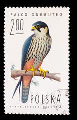 POLAND - CIRCA 1974: A stamp printed in POLAND, shows hobby falc