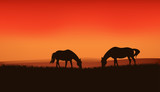 grazing horses silhouettes at sunset - vector background