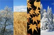 Obrazy na płótnie, fototapety, zdjęcia, fotoobrazy drukowane : Vier Jahreszeiten