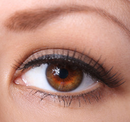 eye with long eyelashes. beautiful woman brown eye