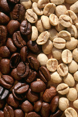 coffee beans fresh and toasted
