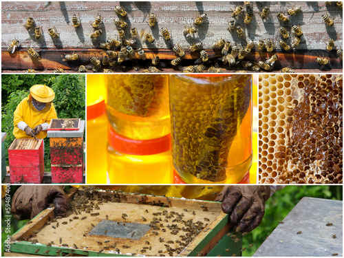 Honey production collage