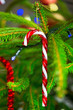 Traditional candy cane hanging on christmas tree