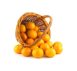 Strewed tangerines from wicker basket lays isolated