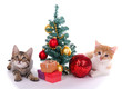 Little kittens with Christmas decorations isolated on white