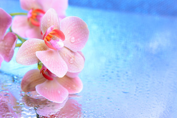 Beautiful blooming orchid with water drops