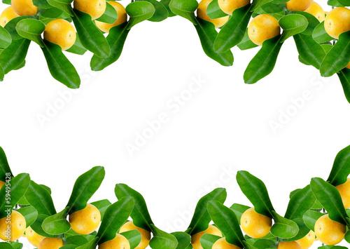 Moldura de laranjas