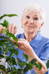 Grandma caring for a plant