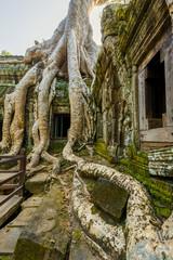 arbre géant, Ta Prohm , Siem Reap, Cambodge
