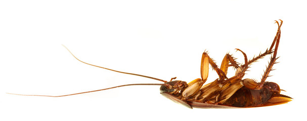 Cockroach profile isolated