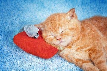 Little kitten sleeping on the red pillow with toy mouse