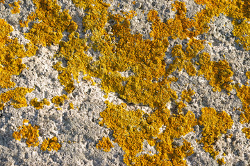 Lichen growing on rock face