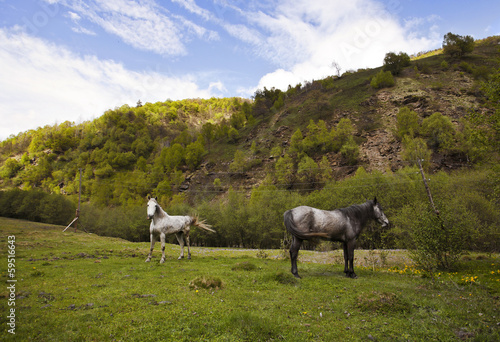 Horses in mountains