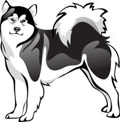 Malamute dog breed