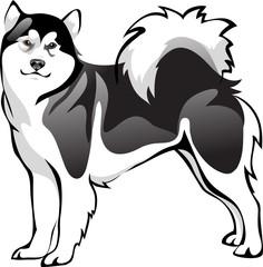 Malamute dog breed