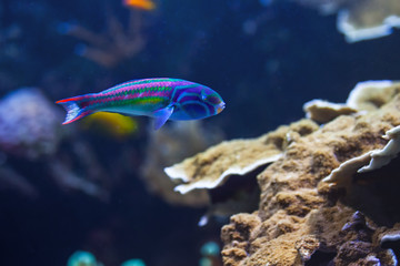 Exotic fish in ocean