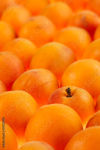 apricots background, full frame, shallow DOF