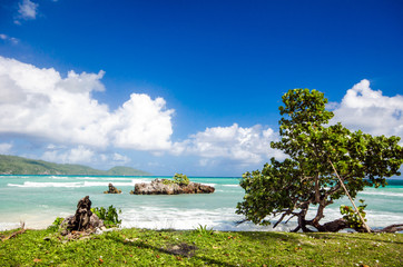 Tropical Beach (Playa Rincon / Samana)