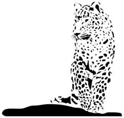 Isolated black leopard on white background - vector illustration