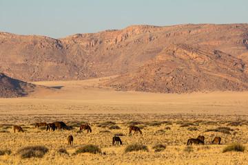 Wild Desert Horses, Namibia